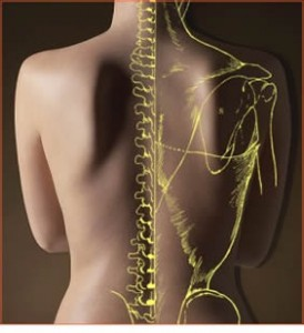 Back Pain|Shiepis Chiropractic|Canton OH